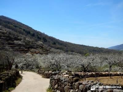 Cerezos en flor en el Valle del Jerte - caminando entre cerezos;grazalema camino buitrago de lozoya